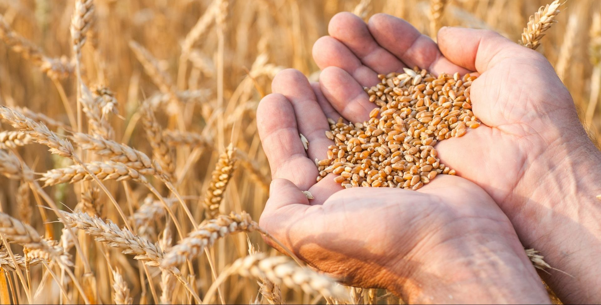 COFCO UK Grains Report – 16/02/2021
