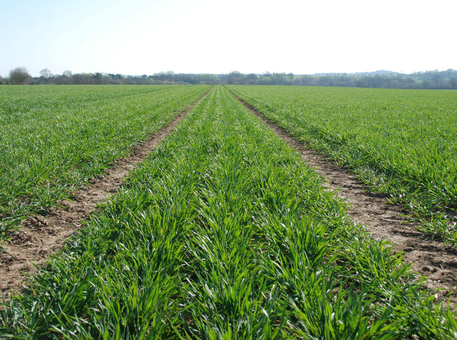COFCO UK Grains Report – 05/05/2021