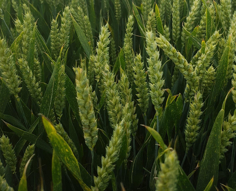 Fertiliser Focus – 15th February 2021