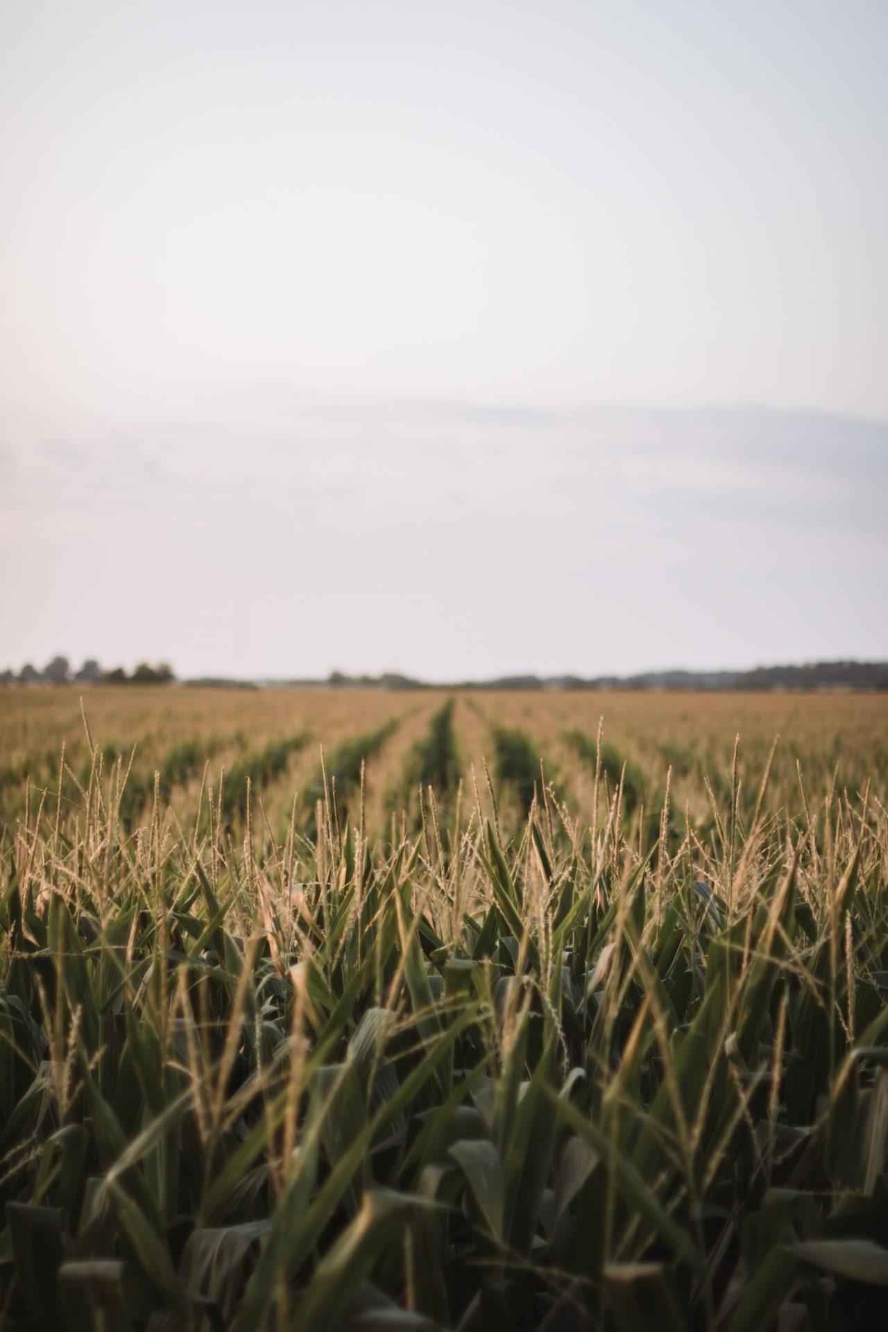 Fertiliser Focus – 6th July 2020